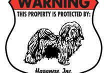 Havanese Signs and Stuff / Dog signs for Havanese and other dog stuff. http://www.signswithanattitude.com/dog_signs/havanese.html