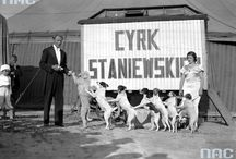 CYRK BRACI STANIEWSKICH / Mój drugi dziadek, Antoni Staniewski w nim pracował.Bracia przejęli go w 1929 r. jako czwarty właściciel.Doszczętnie zburzony w 1939 r. nigdy nie został odbudowany.