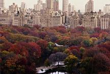 I ❤ NY / by Susie Fellner