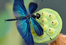 Dragonflies, Butterflies & Wings~