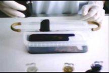 virusologie, bacteriologie si parazitologie