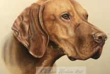 Dogs / Portraits of dogs in pastel by Gillian Ussher www.gillianussherart.com