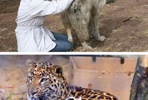 Big dogs and big cats