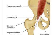 Internal snapping hip sendrom