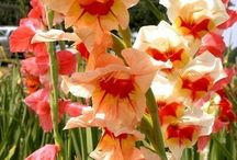 Flower bulbs that do well in warm weather