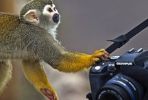 Фотопортал / Сайт для фотографов профессиональных и любителей, начинающих и опытных. Возможность публиковать свои фотографии и рассказывать о себе, делиться опытом и обучаться новым навыкам. Все это фотопортал Fotozatvor