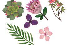 Botanical / Botanical Illustrations created by Jonathan Woodward Studio