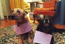 Dog shaming - funny stuff
