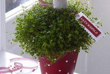 Kreative Blumen-Ideen zu Silvester und Neujahr / Ob Silvesterparty oder Neujahrsempfang. Mit Blumen und Pflanzen liegt man immer richtig!