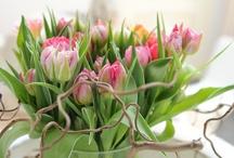 Bossie bloemen