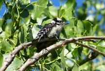 Bird Walk  / Join us for a seasonal bird walk, to see all of the beautiful habitants of The Gardens!