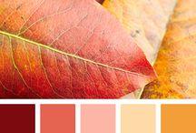 ♡Autumn Colour Palettes♡