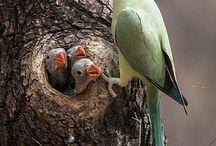 Birds / Nature's Wonders