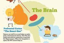 may brain