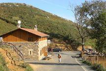 Buen Camino / by Laura Brophy