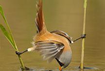 Kuşların dünyası