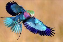 鳥達の世界  Beautiful Birds