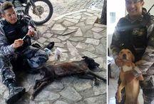 Pessoas que fazem a diferença pelos animais... /  Particulares que se solidarizam com muito amor e carinho pelos animais que tanto necessitam de auxílio. Que DEUS os abençoe poderosamente!