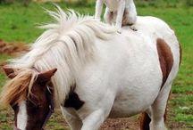 Friends! / Amistad animal