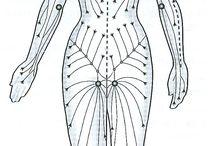 Jalur kelenjar tubuh
