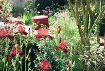 Chelsea Flower Show Garden / Gold medal winning garden with Angus Thompson