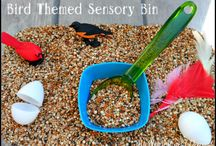 Sensory play / Kiddies