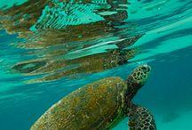 Cute Animal Pics / by JoAnn L. Ellis