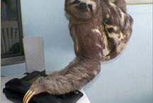 Sloths Rock!