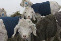 Dyr og strikking