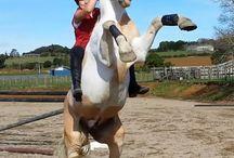 Good Horses being Good Horses