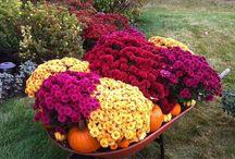 Fall Work Ideas/Decorating