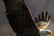 ♥ Sempre aprendendo a voar como águia, segundo a Palavra de Deus.