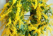 Plantes d'hiver / #plantes #serre #jardinage #jardin