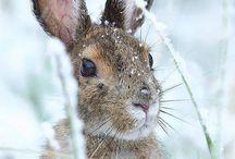 Snowy white / Witte winterdieren