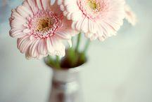 Lovely Floral