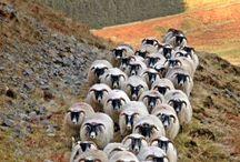 Scottish Moors & Highlands