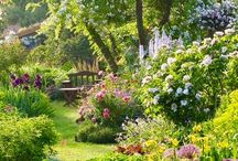 Gardening - Beautiful Gardens