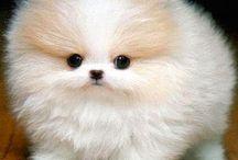 Puppys <3