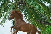 Sommer Pferde