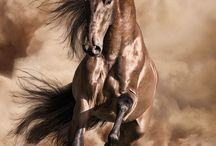 horses are my world