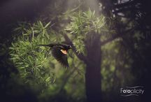 Nature with a Nikon 70-200/2.8 / Images taken with a Nikon 70-200mm.   Most images taken at 2.8,  all images shot wider than f4.   All for the love of bokeh & nature.  Images taken and edited by Fotoplicity.   IMAGES AVAILABLE FOR PURCHASE: http://fineartamerica.com/profiles/9-jennifer-evans.html  www.fotoplicity.com