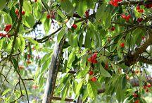 Frutteto - Orchards / Raccolta di Frutti - The Fruits in Orchards.