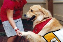 Therapy dogs Perros de terapia / #Dogs can help people that have difficulties and would like to be independent or just have a #friend therer to help them!