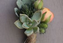Ways to use Succulents