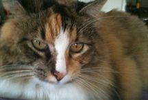 Lost Pet Alert!!! PLEASE SHARE