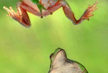 Fantasie dier dieren / Allemaal dieren voor mijn fantasiedier
