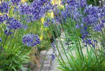 niebieskie rosliny