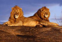 Dream Safari Journey