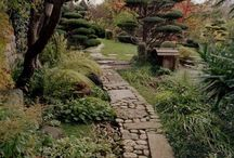 Pathways / steps / paving