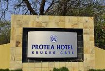 Protea Paul Kruger Gate